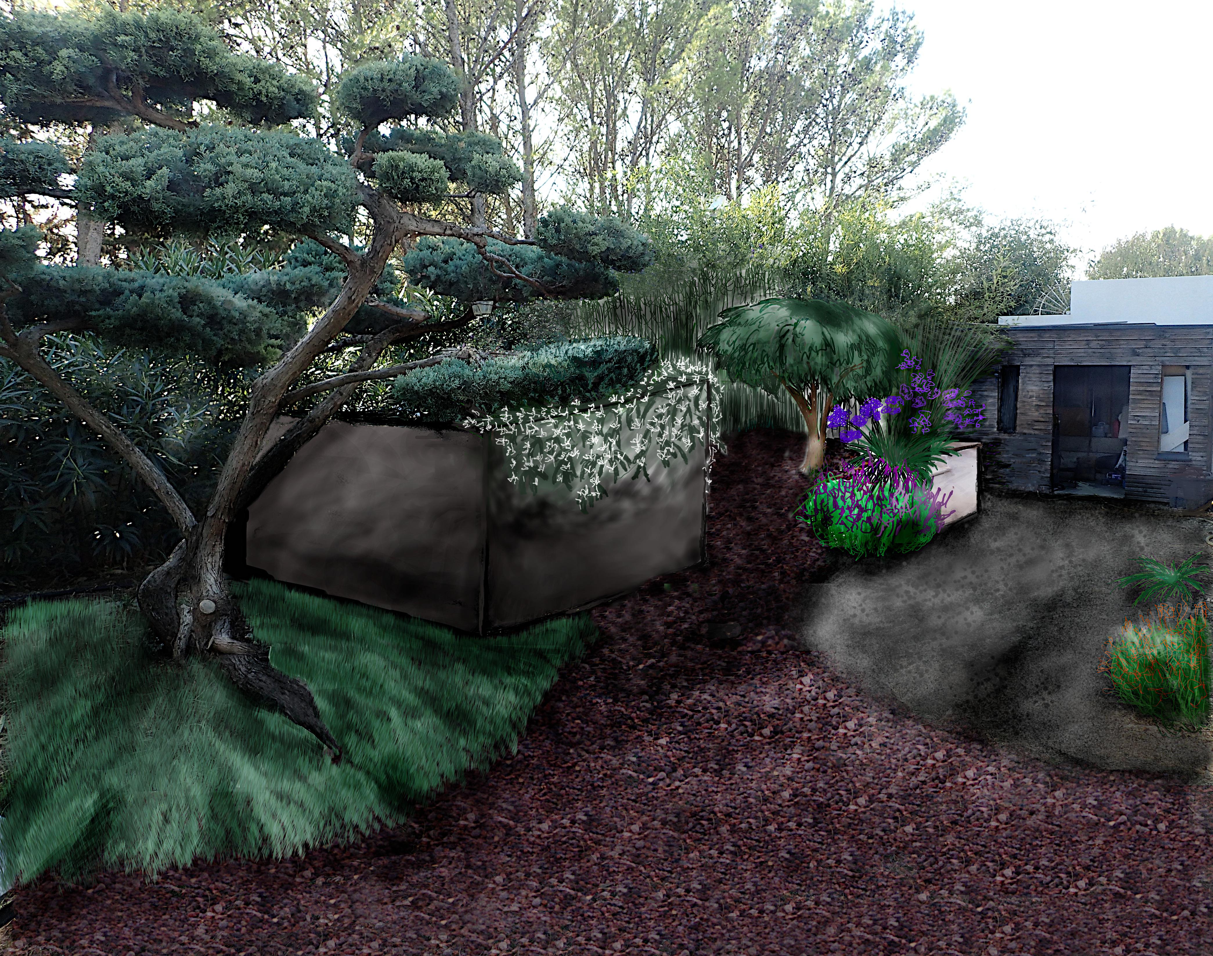 Gingko, Saint Geniès des Mourgues; taille; jardin japonais