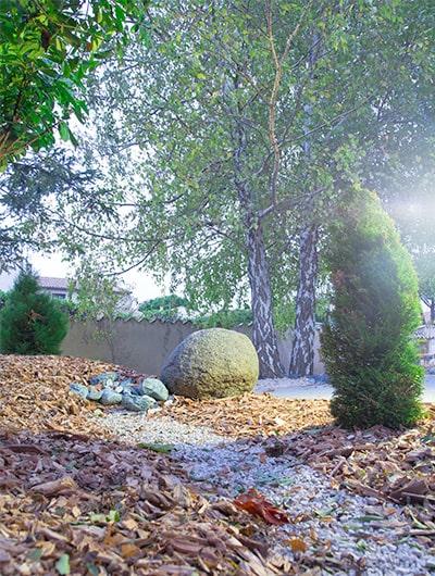 Gingko; jardin japonais